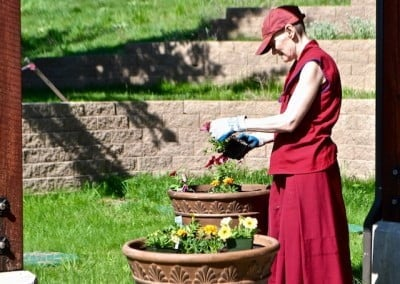 Venerable Samten freshens up the large urns with bright sun-loving flowers.