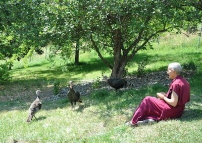 Venerable Semkye with the turkeys. She hopes they will come to the Abbey as human beings in future lives.