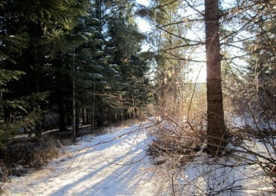 A winter forest scene