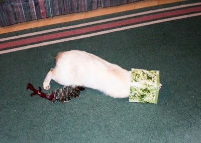 A cat with its head in a paper box