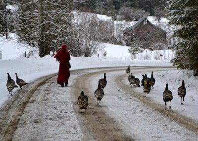 A Buddhist nun walks down a snow covered road, followed by turkeys