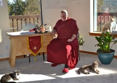 Venerable Tsultrim and three of the Abbey kitties enjoy a sunny afternoon.