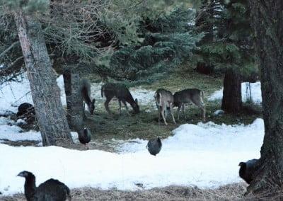 Deer and turkeys