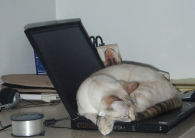 A cat naps on a laptop computer