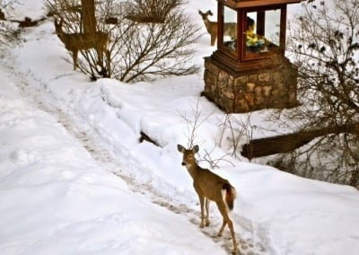 Our deer friends visit the Buddha in the garden early in the morning.