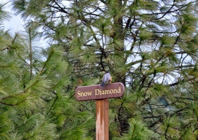 """""""There's no snow on Snow Diamond,"""" chirps the robin happily."""