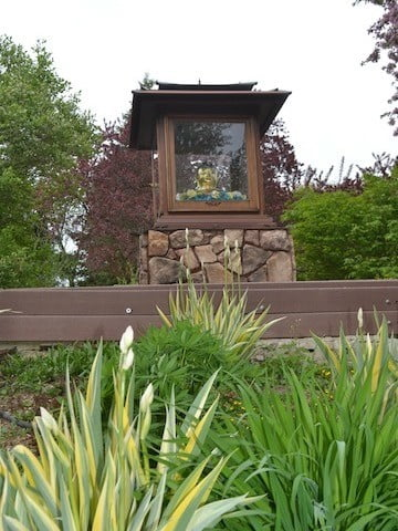 The Buddha garden is bursting with iris and day lily plants that will flower in the next few weeks.