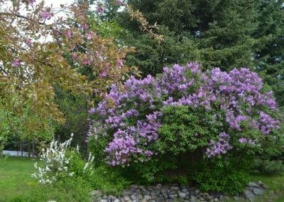 The Abbey garden in full bloom.