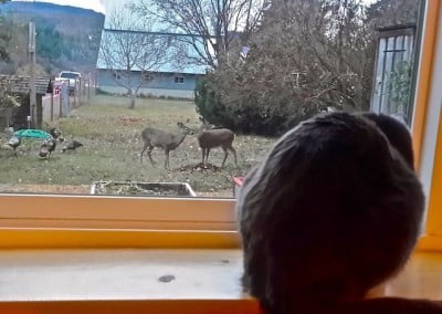 Animal life: Maitri observes the deer and turkeys in the yard.