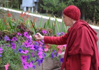 A buddhist nun picking out dead flowers from a blue and purple flowers beds.