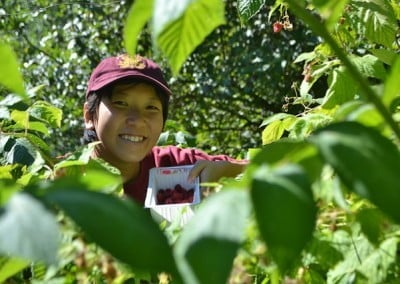 Ruby from Singapore picks raspberries for the first time.