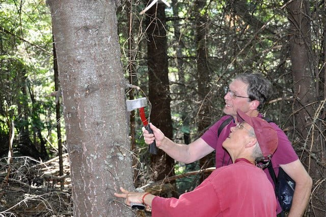 A volunteer forester inspects the trees with Ven. Semkye.