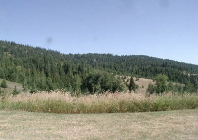 A view of the meadow and the forest beyond.
