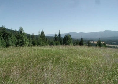 The Abbey meadow