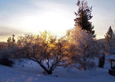 A dazzling frosty sunrise seen through the boughs of the plum tree.
