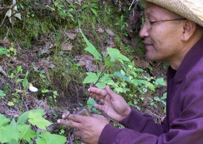 Geshe Namgyal admires a lady slipper orchid one of the endangered species of our region, during his walk in Abbey's forest.