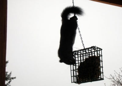 Taking a break from writing, Venerable Abbess took this picture of our resident acrobatic squirrel.