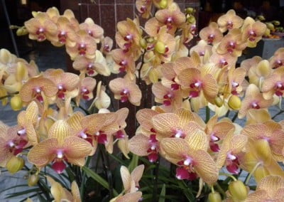 Orchids grow very well in Taiwan and so the altars and planting pots are filled with them.