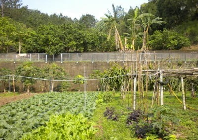 The nuns at Fa Ming grow some of their own food in a garden above the main hall.