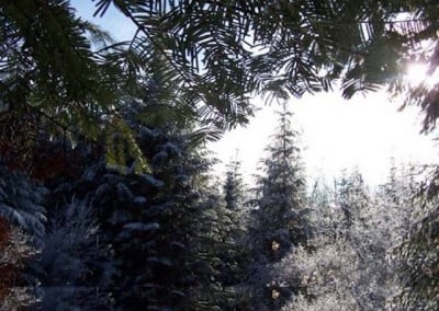 With the new fallen snow and the brilliant clear day the forest sparkled with a shimmering light.
