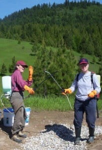 Nanc and Ruth spray the meadow to get rid of knapweed, a noxious plant that has spread a lot in the area.