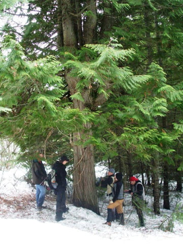 "With a 30"" diameter, this cedar tree is one the largest trees on the property."