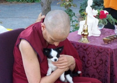 A little puppy gets some reassurance and some mantra from Venerable.