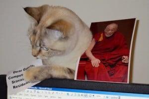 Cat with Dalai Lama photo