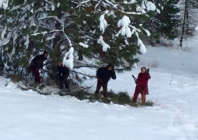 Forest work continues amidst the snow.