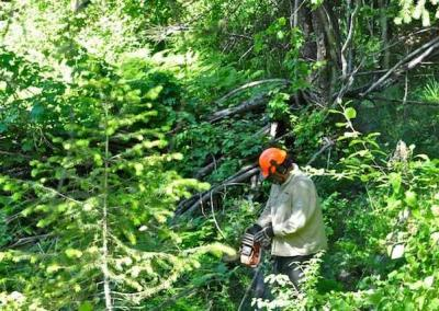 man using chain saw in forest