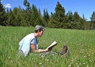 Laywoman reading in meadow
