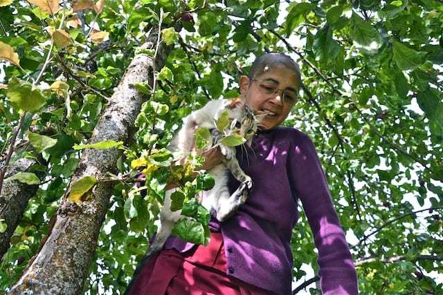 nun taking cat out of tree