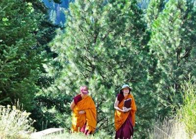 two nuns walking by trees
