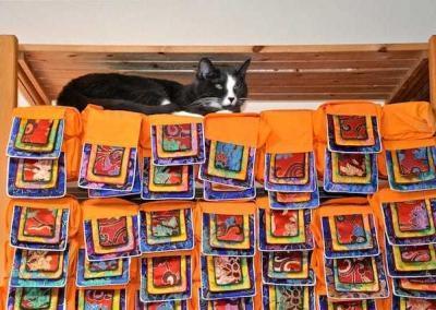 cat sitting on shelf of Tibetan books.
