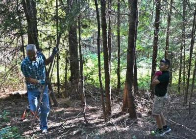 two men cutting down tree in forest