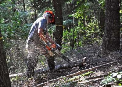 man cutting wood in a forest with chainsaw