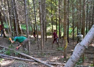 people working in a forest