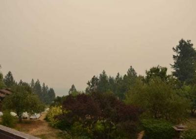 Smoke fills air above forrest