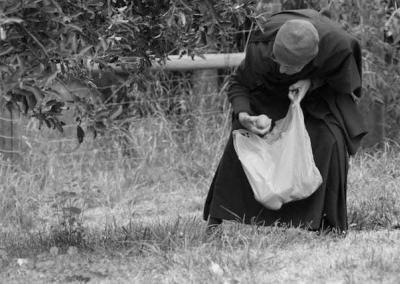 nun picking up apples