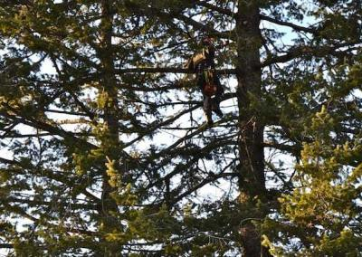 Atop one of the Abbey's 150-year-old firs, arborists Michael and Jose remove dead and broken branches with skill, care and lots of climbing gear.