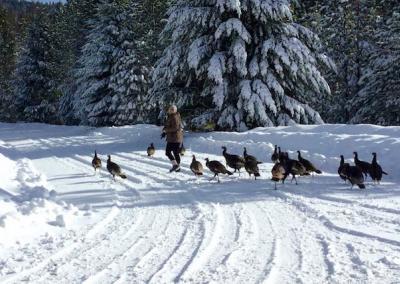 Sabrina keeps the turkeys fed.