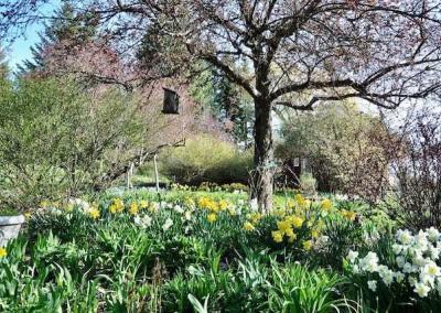 Our glorious spring garden!