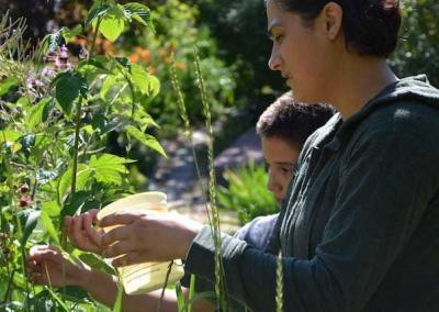Volunteers help with raspberry picking.