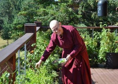Ven. Chonyi picks basil for lunch.