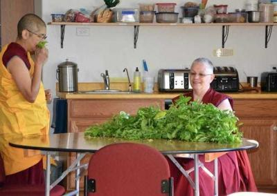 Ven. Nyima and Ven. Yeshe spend break time processing basil leaves.