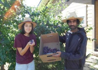 Sydney and Kishan present plums from our youngest plum trees.