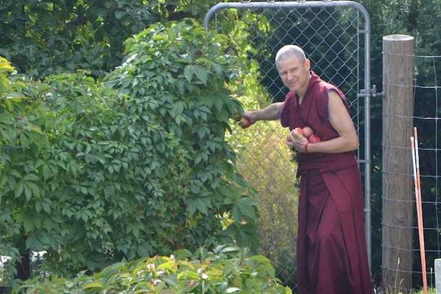 monk with apples