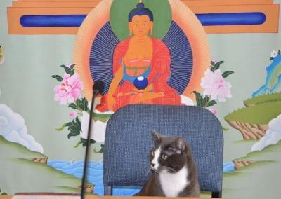 Cat in teacher's seat.