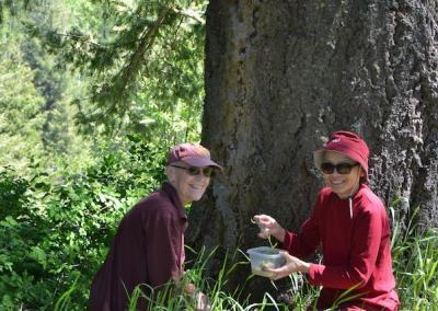 Nuns make offerings to a tree.
