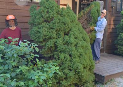 Residents cut trees.